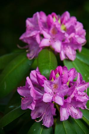 Reinholds, PA: flora