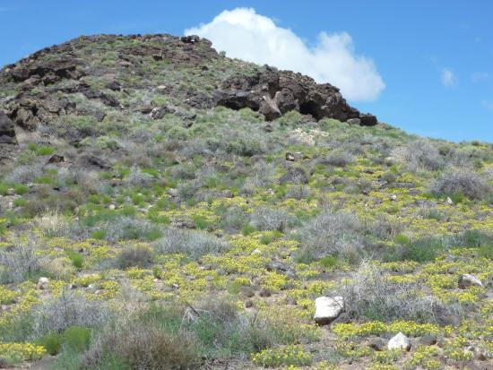 Volcano Park: Wild flowers on the side of one of the volcanos