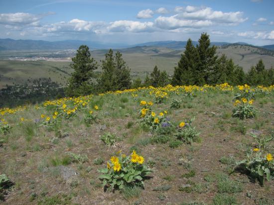 Mount Jumbo North Peak Trail
