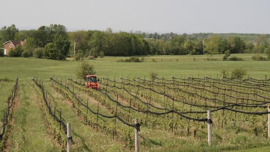 Coffin Ridge Boutique Winery照片