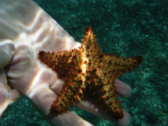 Casita Tropical: snorkeling