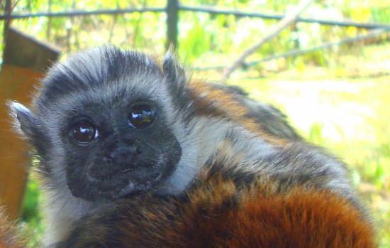 jardin encantado park baby tamarin monkey