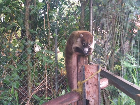 jardin encantado park koati