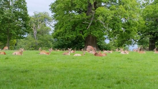 Woburn Abbey and Gardens : Deer park
