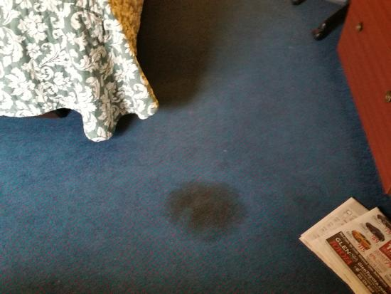 Nittany Budget Motel: Huge feces stain on carpet in Room 118.  Gross.