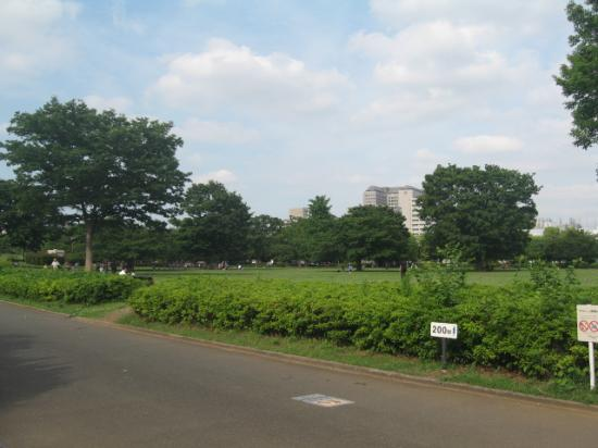 Kiba Park: 公園内の様子