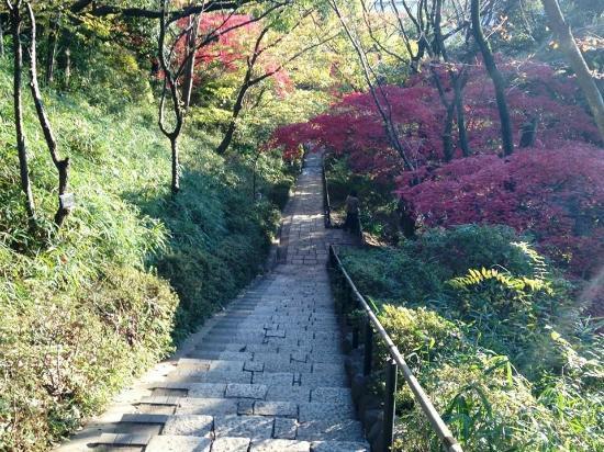 Denenchofu Seseragi Park