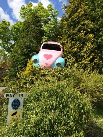 Dalton Pottery Art Cafe: Car stuck in tree!