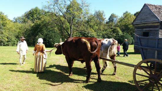 Fort Defiance, Lenoir, NC: Driving the oxen