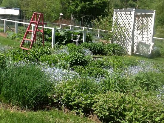 Inky Dinky Oinkink: Spring garden