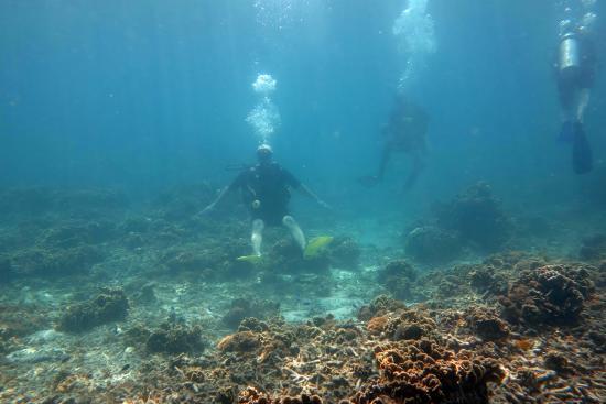 Live & Let Dive: под водой