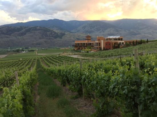 Burrowing Owl Estate Winery Guest House: View from the vineyards at sunset.