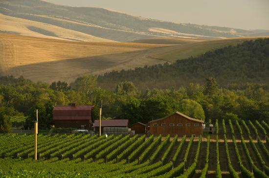 Vineyards surrounding Walla Walla Vintners