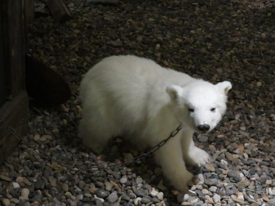 Svalbard Museum: One of the exhibits that looked particularly lifelike.