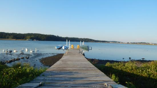 Birds of a Feather Ocean Lagoon Bed & Breakfast & Vacation Rental: Kayaks and Canoes are available for use - do it.