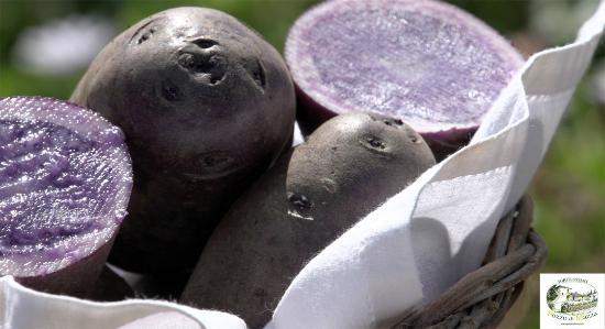 """Agriturismo Pozzo di Mazza : Le nostre patate """"Blue Salad"""", una delle specialità della nostra campagna e della nostra cucina."""
