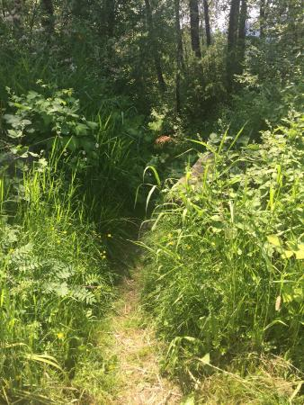 Pizza express: Path to the river