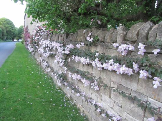 The Coach House : A wall of clematis and honeysuckle