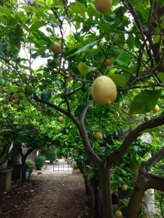 Agriturismo Villa Nicetta : Gastvrij, prachtig, authentiek, lekker eten, netjes verzorgd etc. Een paar geweldige dagen gehad