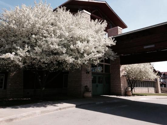 Lied Lodge & Conference Center: The front entrance snowapple tree