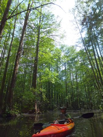 Coastal Kayak: A paddle through the forest.
