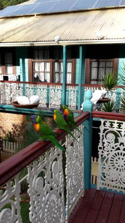 Riviera B&B: Birds on the balcony