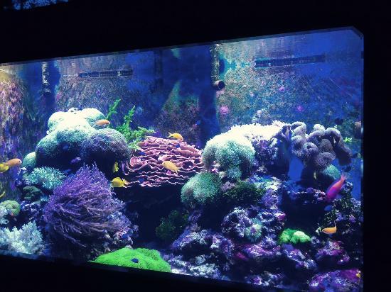 The Habitat Picture Of Aquarium Of Niagara Niagara