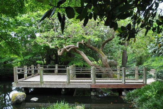 San Francisco Botanical Garden Picture Of Golden Gate Park San Francisco Tripadvisor