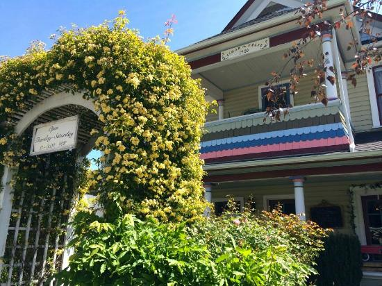 The Painted Lady Bed & Breakfast and Tea Room: Banks rose showing off at The Painted Lady B & B -