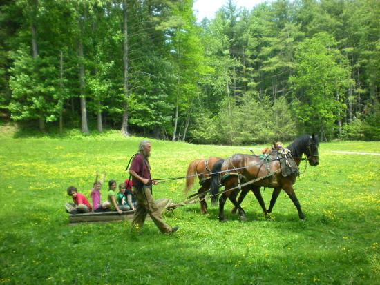 Boone, Carolina del Norte: Educational Horse Classes for children