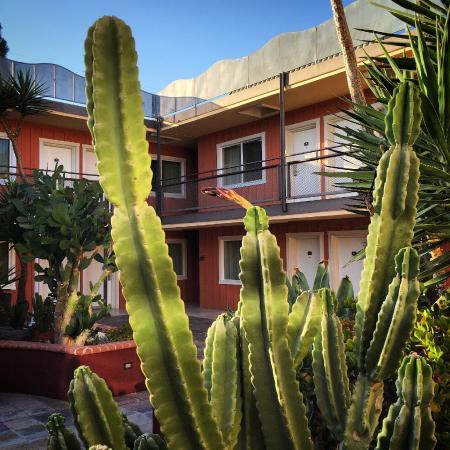 Ramada Los Angeles/Downtown West: Yo Mexicana.