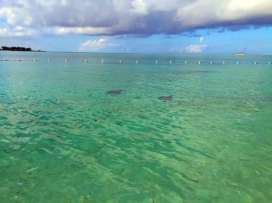 Blue Water Resort on Cable Beach: Stingrays swimming by. It was pretty neat.