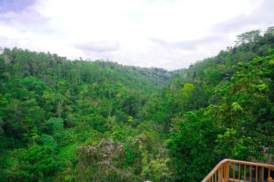 Payangan, Indonesia: the endless view of the Bali jungle from the main pool area