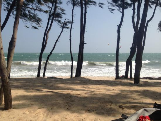 Sunny Beach Resort: сосновая роща