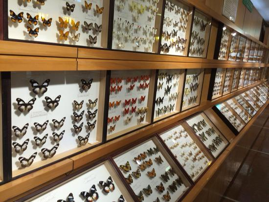 Toma World Insect Museum Papillon Chateau