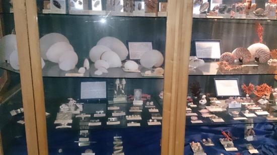 Jeffrey's Bay Shell Museum (Charlotte Kritzinger Shell Museum): Shells - Jbay