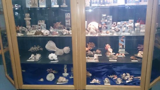 Jeffrey's Bay Shell Museum (Charlotte Kritzinger Shell Museum): Shell's behind Glass