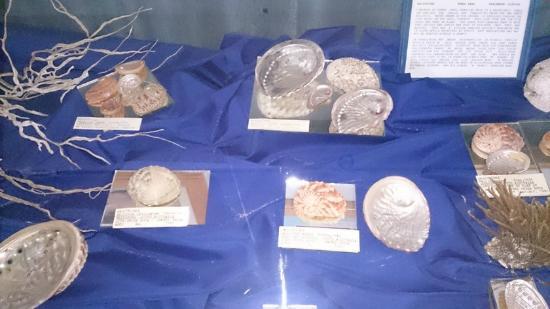 Jeffrey's Bay Shell Museum (Charlotte Kritzinger Shell Museum): Abalone / Perlemoen shell