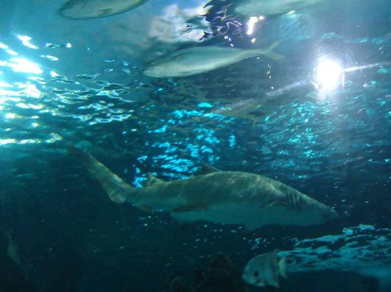 Picture Of Ripley 39 S Aquarium Myrtle Beach Tripadvisor