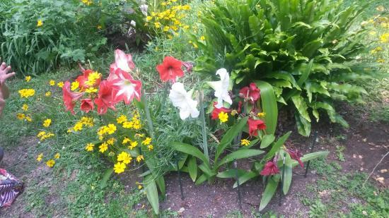 Aiuole giardino immagini aiuole giardino immagini with for Aiuole fiorite immagini