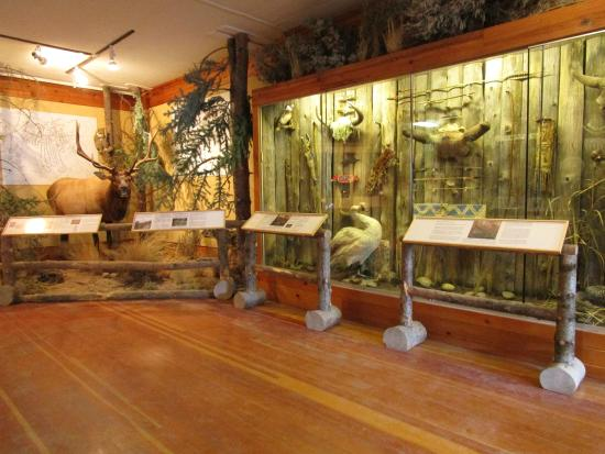 Jackson Hole Museum: Deloney Street: display wall and corner elk