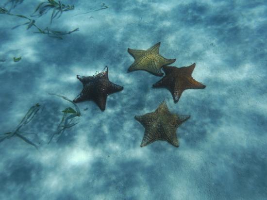 """Turneffe Island, Belice: """"Starfish Motel"""" snorkel site"""