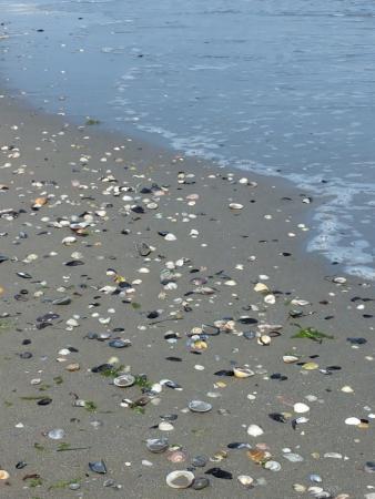 Dune Agriturismo Relais: spiaggia
