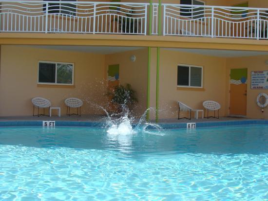 Frenchy's Oasis Motel : Pool fun