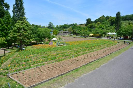 Tondabayashi Savor Farm : サバーファーム