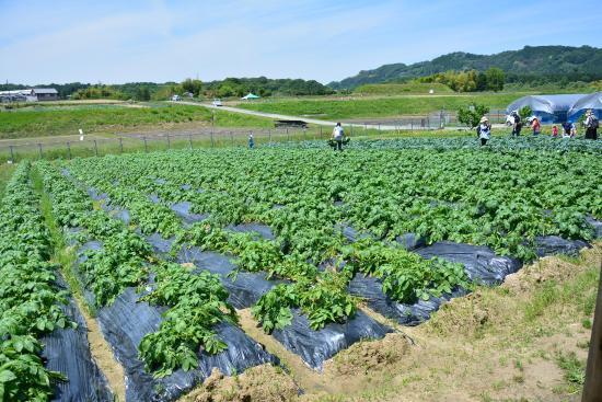 Tondabayashi Savor Farm