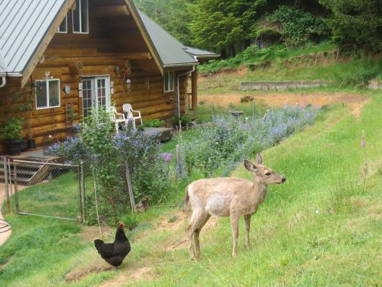 Powder Creek Ranch Bed & Breakfast: Backyard Wildlife 2