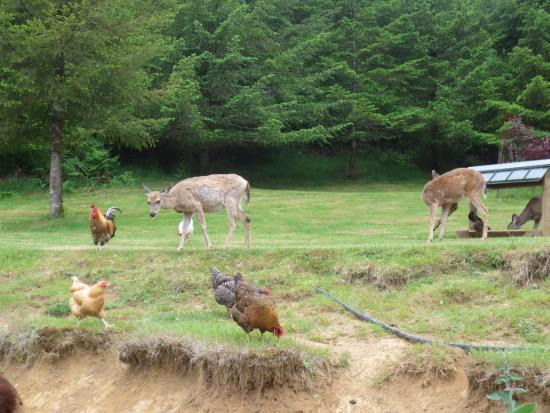 Powder Creek Ranch Bed & Breakfast: Backyard Wildlife 1