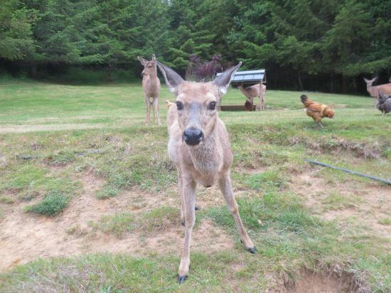 Powder Creek Ranch Bed & Breakfast: Backyard Wildlife 3