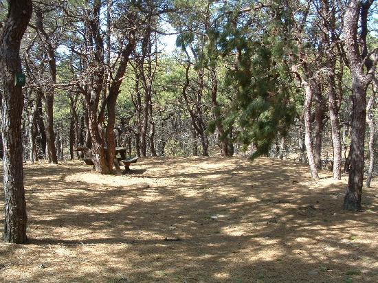 North Of Highland Camping Area: Campsite #53 in Area 2
